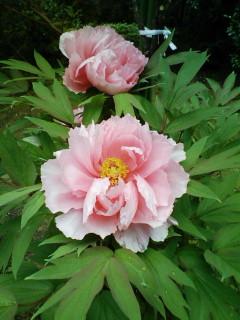http://junjun.peewee.jp/blog/images/blog-photo-1209860754.22-1.jpg